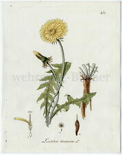 C. 1790 Hand-coloured Botanical Copper Engraving.