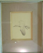 ORNITHOLOGY BIRDS A SHAG KENNETH CHILD PENCIL 1955