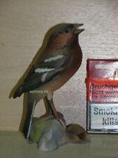 +# A015583_03 Goebel Archiv Muster Vogel Bird Fink Buchfink Chaffinch 38-169