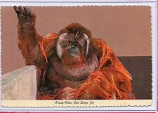 "ANIMAL COLOR SERIES,""AHKUP"" ORANG-UTAN,MONKEY (BORNEO),ZOO SAN DIEGO,CA"