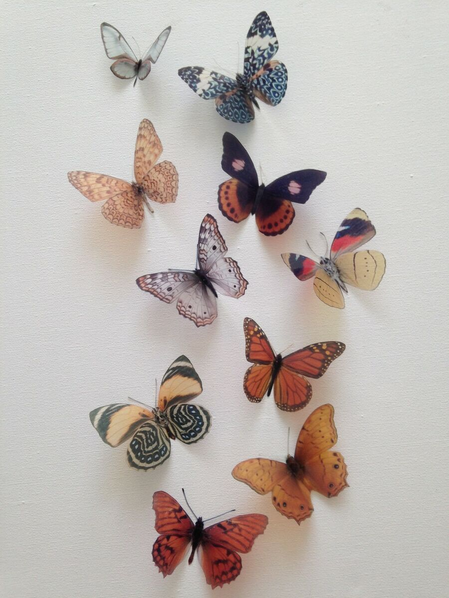 butterfliesbylorraine