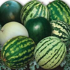 Vegetable Seeds Watermelon 33 Warriors Mix Organically Grown NON GMO