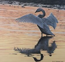 Evening Reflections by Ron Parker