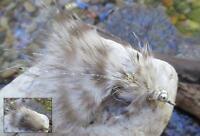Gilchrist Fliegen. 3 x  MAGNUS MEERFORELLEN STREAMER. Gr.6. Auswahl von Farben