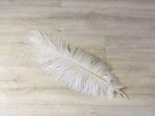 Auffällige Flügelfedern Stockente,natur,5-7cm Entenfedern,Karneval,Masken