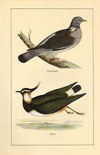 Vintage Imprimé Oiseau ~ Pigeon Bois & Pirlouit (Vanneau)