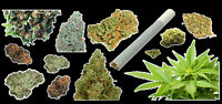 Weed Marijuana Cannabis Vinyl Sticker Bud Pack #1