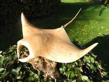 Wooden Manta Ray Carving - Hand Carved Manta Ray Sting Ray 30cm