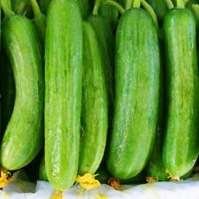 Vegetable Cucumber Beth Alpha 80 seeds