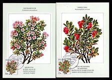Island 619/20 Maximumkarten Blumen u.a. Alpenazalee