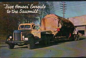 Logging in Pacific Northwest WA OR Vintage Postcard