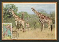 CSSR MK 1977 FAUNA GIRAFFE GIRAFE MAXIMUMKARTE CARTE MAXIMUM CARD MC CM d4404