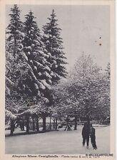 # CAMIGLIATELLO- ALTOPIANO SILANO: PINETA CARICA DI NEVE   1951