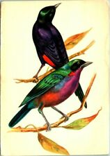 C42-8231, BIRD THEME OR BIRD TOPIC, 4X6, POSTCARD.