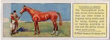 Thoroughbred Horses c80 Y/O Trade Ad Card