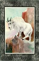 C48-2438, MOUNTAIN GOAT, POSTCARD.