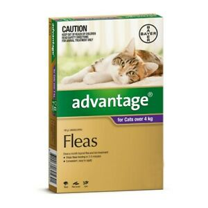 Advantage Flea Treatment Large Cats Over 4kg Purple