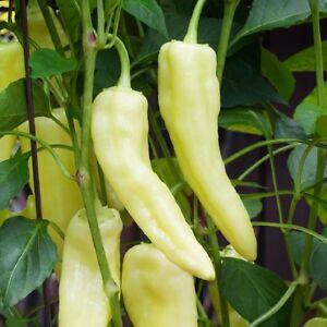 Sweet Pepper - Sweet Banana  - Appx 100 seeds