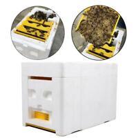 Ruche Boîte en plastique Récolte Ruche Pollinisation Apiculture Apiculture Acc