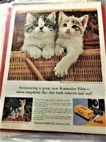 Kodak Kodacolor Film ad with cute kitties - Full page from Life Magazine