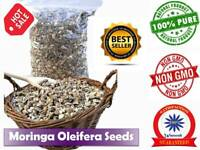 Moringa Oleifera Seeds Pure Organic Quality Herb Health Benefits NON-GMO