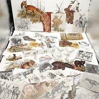 Vintage wild animal Ephemera lot paper craft art junk journaling prints mammal
