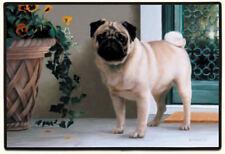 NEW Pug Dog on Porch Non-Slip Rubber Backed Doormat Door Mat