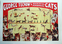 XL,HIQ Facsimile of 1906 Techow's Performing Cats Vaudeville Circus Poster 36x26