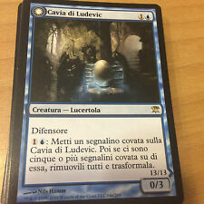 Magic - CAVIA DI LUDEVIC