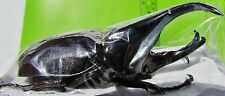 Lot of 10 Rhinoceros Fighting Beetle Xylotrupes gideon tanahmelayu Male 60mm Usa