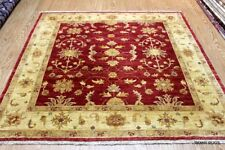 SQAURE 6' X6' ELEGANT HANDMADE RUG. Red Background Vegetable Dyed Natural Color