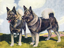 More details for norwegian elkhound dogs old dog colour art print page by nina scott langley