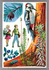 1972 Russian card THINGS IN THE FOREST: WOODPECKER BEETLE BLUEBERRIES MOSS