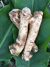1 Lb. Horseradish Root. Organic, buy one get one free (2 Lbs Total)