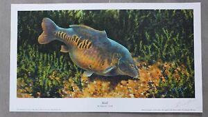 Fishing Angling Art Print Freshwater Fish Carp Basil Signed Artist Richard Smith