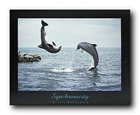 Synchronicity Dolphins Jumping Into Ocean Wall Decor Art Print Poster (16x20)