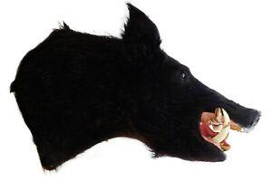 BLACK WILD BOAR RAZORBACK FERAL HOG PIG SHOULDER MOUNT TAXIDERMY REAL TUSK