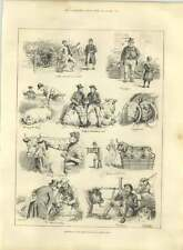 1885 Sketches At Smithfield Club Cattle Show Cleaning Weighing Luncheon