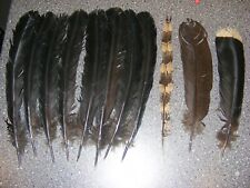 Argus, Hokko,Wallich Pheasant - Tail Feathers