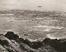 1960s EDWARD WESTON Vintage Pacific Fishing Boat Kelp Seascape Photo Art 11X14