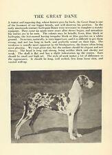 Great Dane - 1931 Vintage Dog Print - Matted