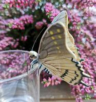 Porzellan Schmetterling Figur Beige Topfhänger Handbemalt Sammeln Klima Sammlung