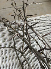 Honey Locust Branches Thorns Arts and Crafts 15 piece Lot Arts and Crafts Decor