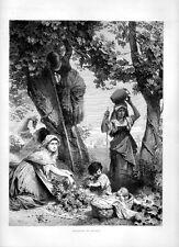Stampa antica VENDEMMIA in TOSCANA uva viti 1877 Old print