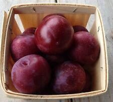 Japanese Plum fruit tree seedling edible fruit hardy LIVE PLANT cold hardy