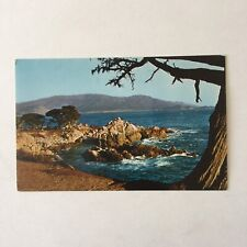 Cypress and Sea Scape Carmel and Pacific Gove Cypress Point Unposted Postcard