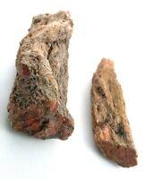 Two Petrified Agate Fossil Wood Limb End Specimen 1900 Foreclosure Sale EBS229