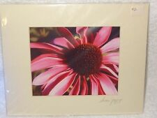 Hand Signed Matted Print- Susan Jump- Purple Forget Me Knot Daisy Flower-2- Usa