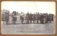 POSTCARD   SOCIAL   HISTORY    Donkeys  on  the  sands
