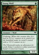 1x YOUNG WOLF - Rare - Dark Ascension - MTG - NM - Magic the Gathering